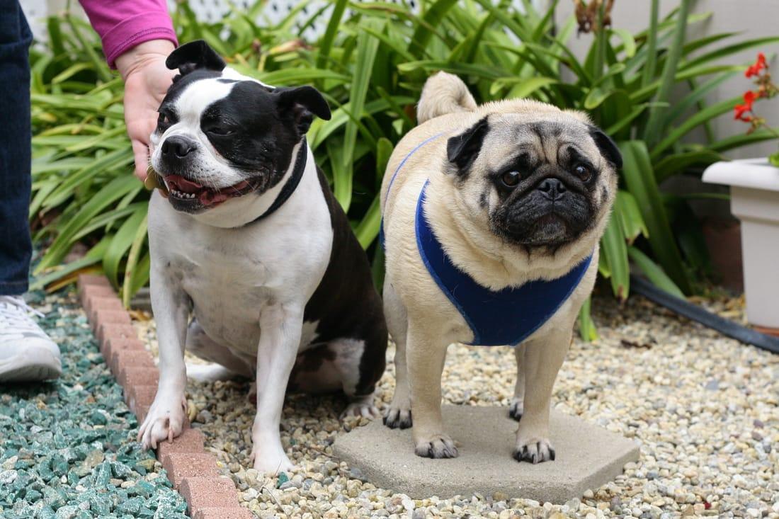 Dog Sitter, Dog Walker